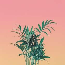 Palm tree leaves on pink pastel sky. Minimal greenery concept.