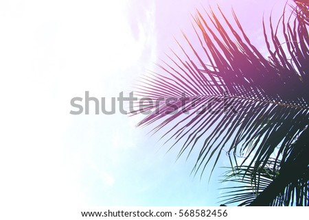 Palm tree leaves on sky background. Coco leaf over sky. Pink  blue toned photo. Tropical island natural backdrop. Paradise island fantastic template with place for text. Beach party invitation banner