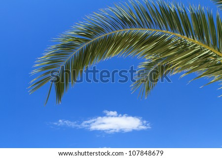 palm tree leaves over blue sky