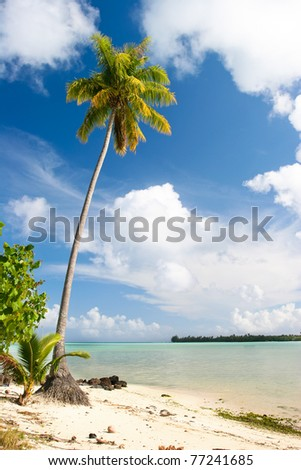 Palm tree, Maupiti, French Polynesia