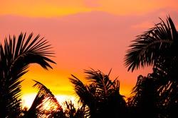 palm tree of sunset on sky background