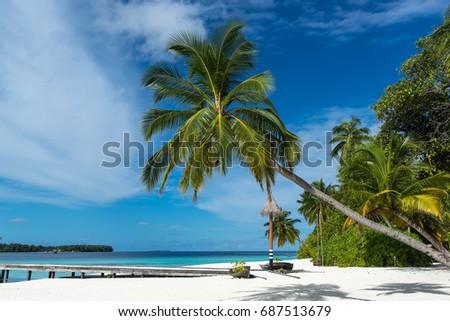 Palm tree on a tropical beach  #687513679