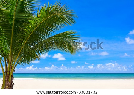 Palm tree on beach background #33031732