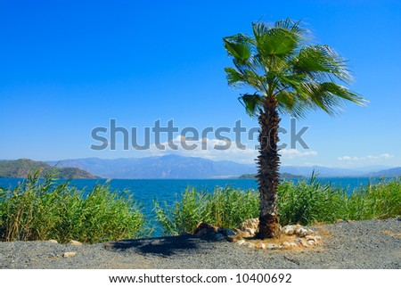 Palm tree on coast of the river Dalyan in Turkey