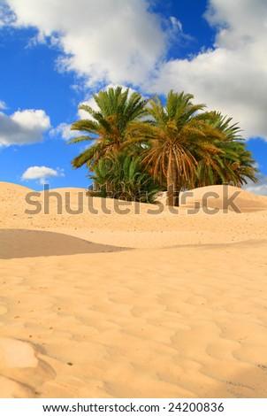 palm tree on sahara desert