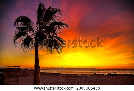 Palm tree on the beach at sunset. Palm tree at sunset. Palm beach at sunset. Sunset palm beach