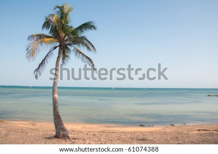 Palm tree on the beach in Key West Florida