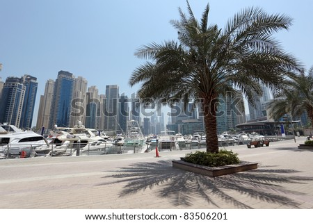 Palm Tree on the Promenade of Dubai Marina, United Arab Emirates