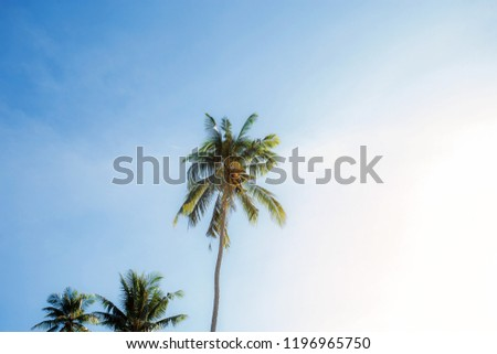 Palm tree on the sky with colorful at sunlight. #1196965750