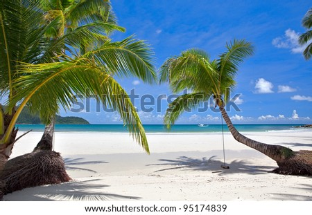 Palm tree on the tropical beach near sea water with sky background
