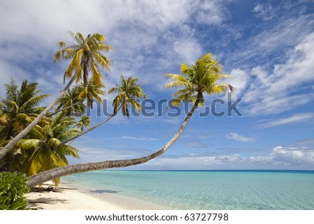 Palm tree on whit sand beach and blue lagoon in paradise island