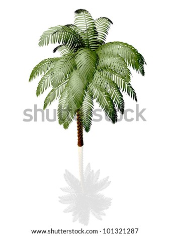 Palm tree on white background with reflection