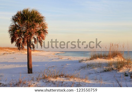 Palm Tree on White Sand Beach at Sunset