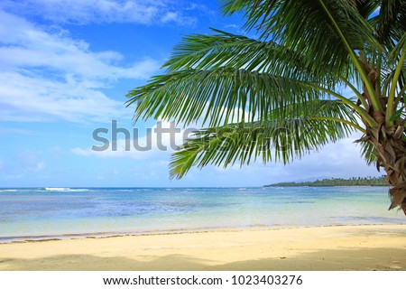 Palm tree on white tropical beach. Travel background. #1023403276