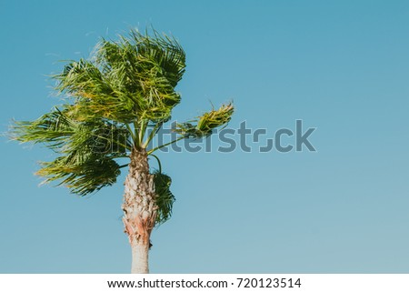 Palm tree on windy day