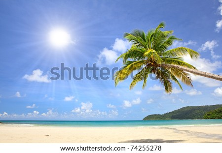 Palm tree over beautiful sandy beach near blue sea. Summer nature view.