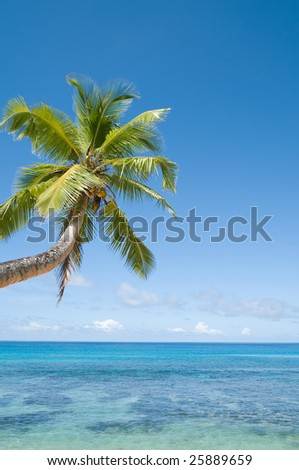 Palm tree over shallow water