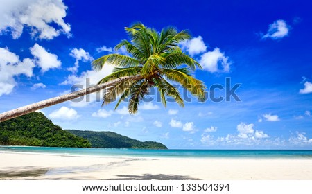 Palm tree over the beach
