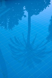 palm tree reflections in a swimmingpool with blue tiles