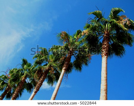 Palm Tree Row againbst blue sky - stock photo