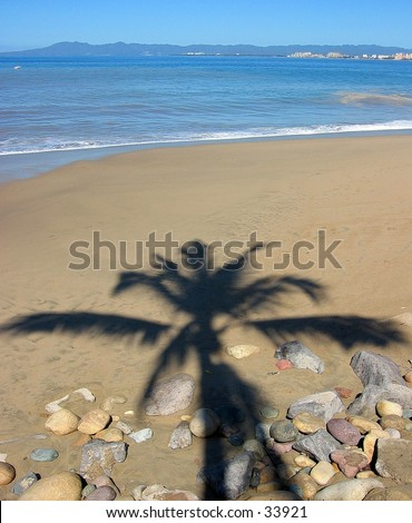 Palm tree shadow in Puerto Vallarta, Mexico
