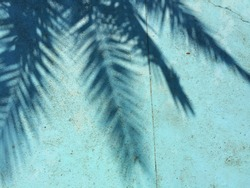 Palm tree shadow on a blue green background.