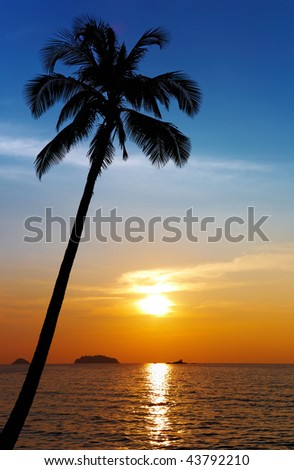 Palm tree silhouette at sunset, Chang island, Thailand #43792210