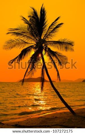 Palm tree silhouette at sunset, Koh Mak island, Thailand
