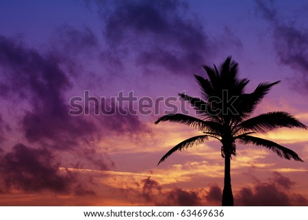 palm tree silhouette on sunrise in tropic