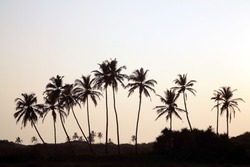 Palm tree silhouette, sunrise India