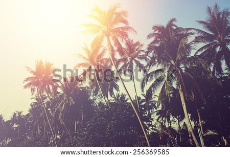 palm tree sunset. instagram...
