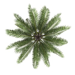 Palm tree top view isolated white background