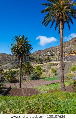 Palm tree valley view rural landscape field mountains, Taguluche village, La Gomera, Canary Islands