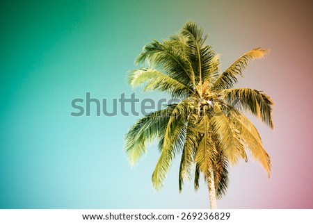Palm tree, Vintage light leak filter effect