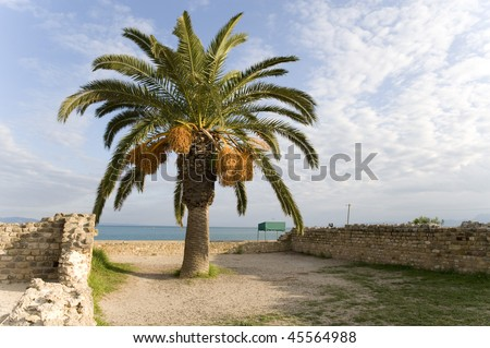 stock-photo-palm-tree-with-blue-sky-and-nice-cloud-in-carthage-tunisia-45564988.jpg