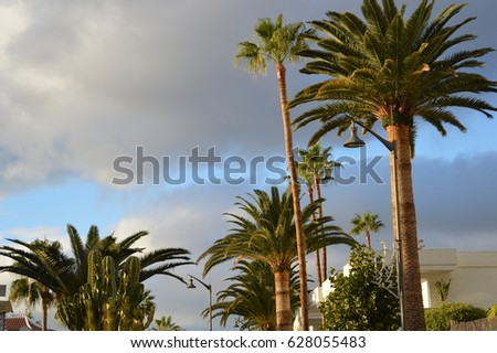 Palm trees Stock fotó ©