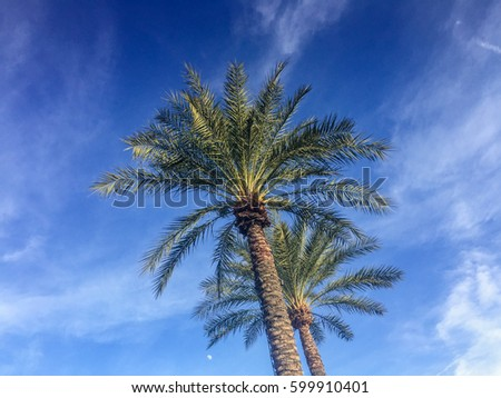 palm trees against a bright...