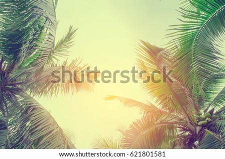 Palm trees against blue sky Palm tree at tropical coast vintage toned and stylized coconut tree  - Shutterstock ID 621801581