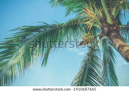 Palm trees against blue sky, Palm trees at tropical coast, vintage toned. #1410687665