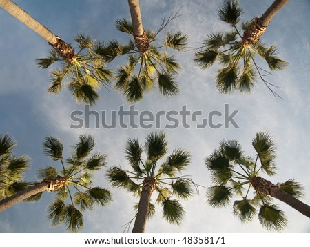 Palm trees against blue sky with clouds in the city of Los Angeles