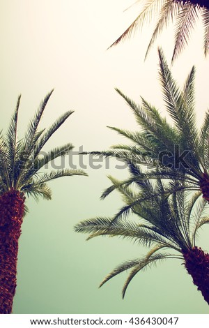 Palm trees against sky. retro style image. travel, summer, vacation and tropical beach concept.