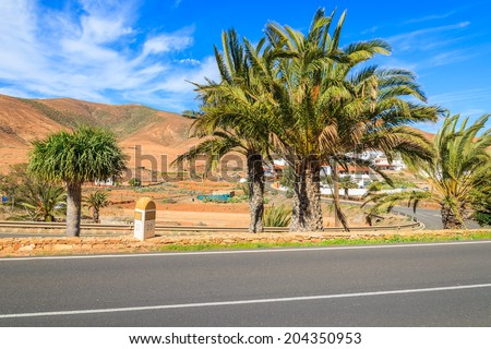 Palm trees along a road and view of volcanic mountains near Pajara village, Fuerteventura, Canary Islands, Spain