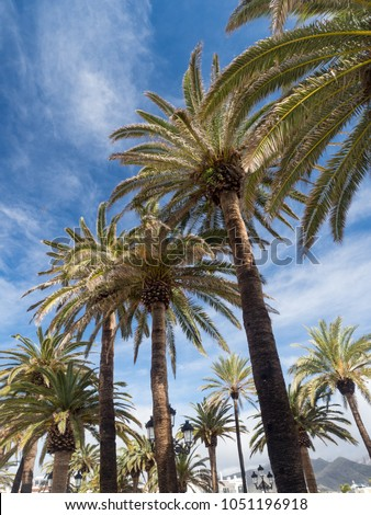 Palm trees along the coast in Nerja at beautiful sunny day. Image of tropical vacation and sunny happiness. Sunny photo. Modern painting, background illustration. Spain