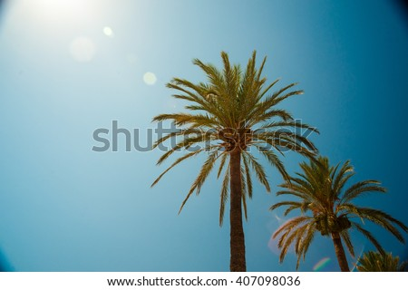 palm trees along the coast in...
