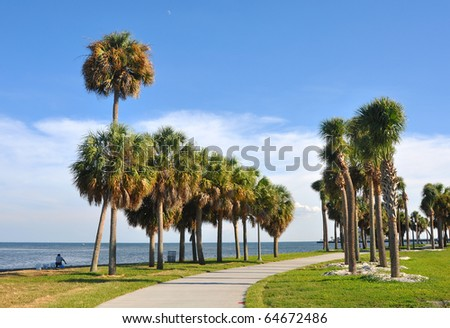 Palm trees alongside a beach walkway in St. Pete, Florida
