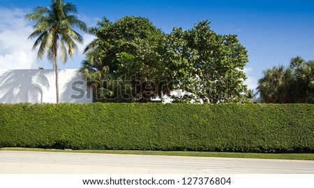 Palm trees and a hedge