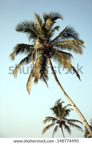 Stock Photo Palm trees and blue sky background
