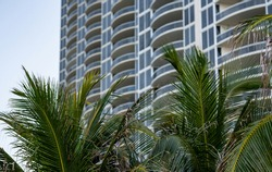 Palm trees and highrise towers in Miami Beach USA