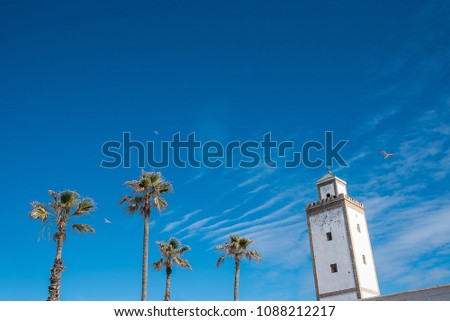 palm trees and minaret  #1088212217