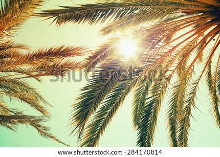 Palm trees and shining sun over bright sky background. Vintage style. Toned photo with vintage colorful tonal filter effect, instagram old style